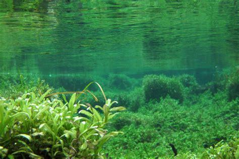 Underwater Garden by Junecreek