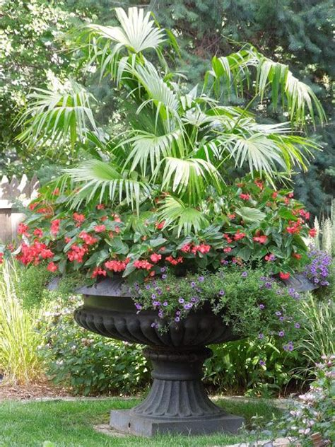 35 Best Palms In Containers Images On Pinterest Tropical Palm Gardens Flowers