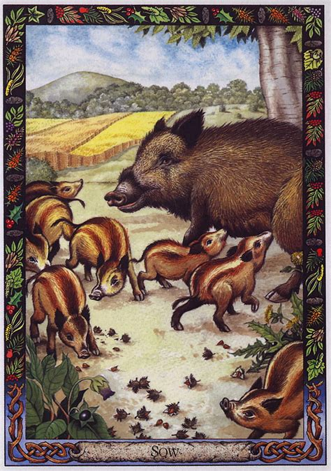 the druid animal oracle lrs the druid animal oracle painted by bill worthington sow image only
