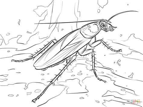 American Cockroach Coloring Page Free Printable Coloring Pages Cockroach Coloring Pages