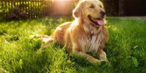 least aggressive breeds what are the best breeds for apartments