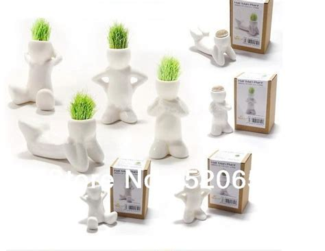 Gifts For Office Desk Free Shipping Magic Diy Office Desk Decoration Planting Hair White Plant Diy Plant Gifts