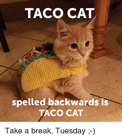 meme tuesday taco cat spelled backwards is taco cat take a