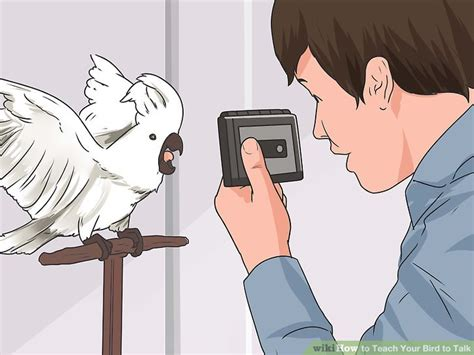 how to teach your to speak how to teach your bird to talk 11 steps with pictures wikihow