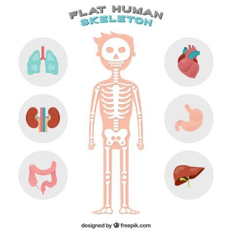 belle squelette humain telecharger des vecteurs gratuitement