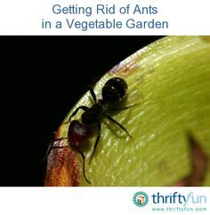 How To Get Rid Of Ants In Vegetable Garden by Bugs Bad Bugs On 208 Pins