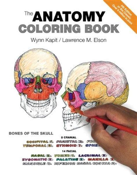 anatomy coloring book kapit pdf anatomy textbooks shop for new used college anatomy books