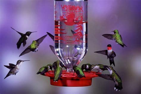 best 25 hummingbird feeder homemade ideas on pinterest