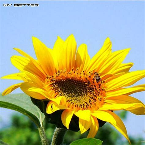 potted sunflower picture more detailed picture about led flower pot gerbera fake flowers yellow sunflower seeds for home garden potted plants