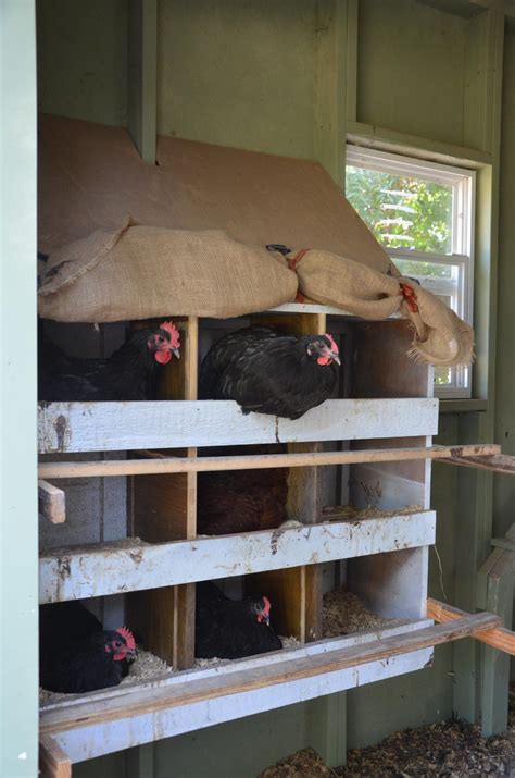 backyard poultry production backyard poultry producers should take precautions against salmonella