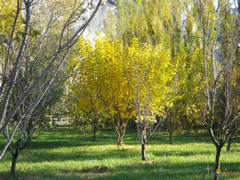 Aménagement Jardin Avec Spa 2934 by Arbre Fruitier Exotique Obasinc
