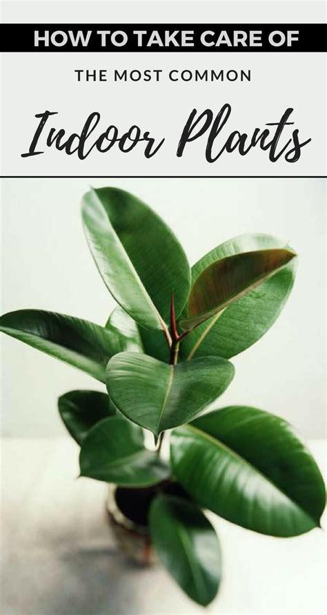 care    common indoor plants