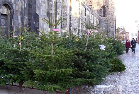 bauers weihnachtsbaum mit handy und axt auf weihnachtsbaum suche