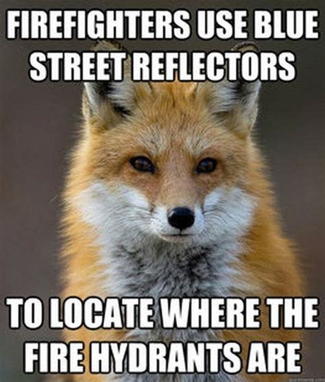 Fox Meme - fun fact fox meme barnorama