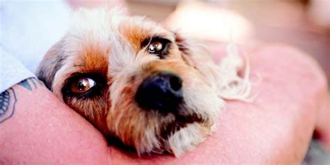 dogs that can be left alone some dogs left alone can be trained to behave better the local weekly