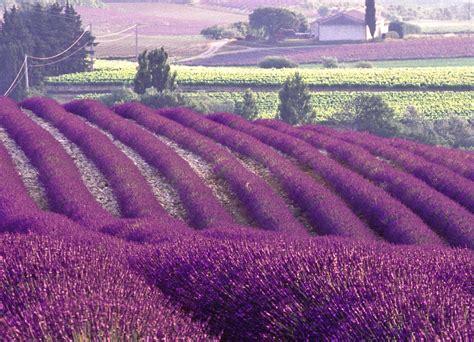 jardines setos imágenes setos de jardin cuidar de tus plantas es facilisimo com