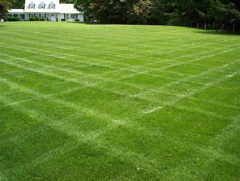 semina erba giardino erba giardino prato