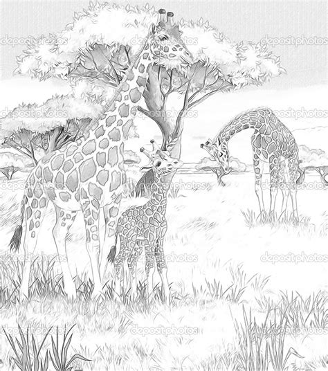 giraffe habitat coloring pages mom and baby giraffe coloring pages safari giraffes