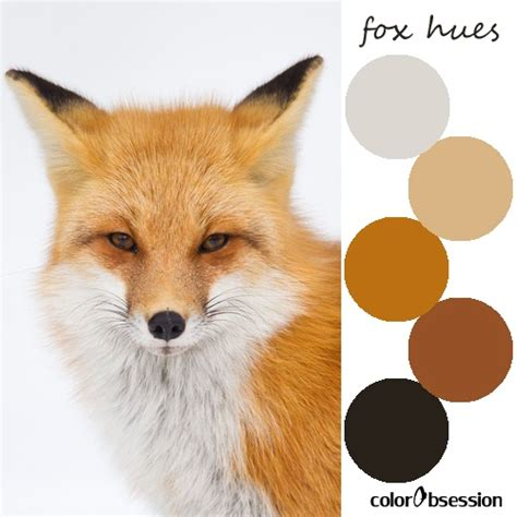 what color are foxes fox hues color palette
