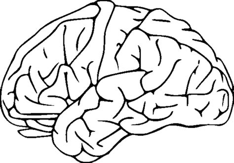 Brain Clipart Coloring Pages To Print