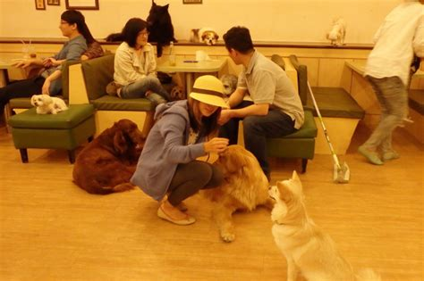 play with puppies nyc cafe in nyc indiegogo