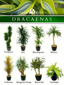 garden plants names and pictures 25 best ideas about corn plant on pinterest corn plant care identify plant and agriculture