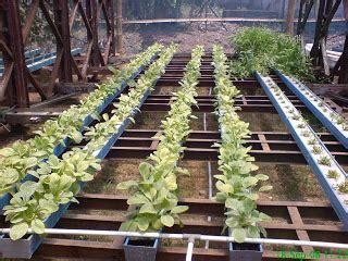 Tempat Sayuran Buah Dicky K 7 bertani secara modern apakah hidroponik