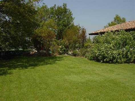 alberi piccoli da giardino giardini