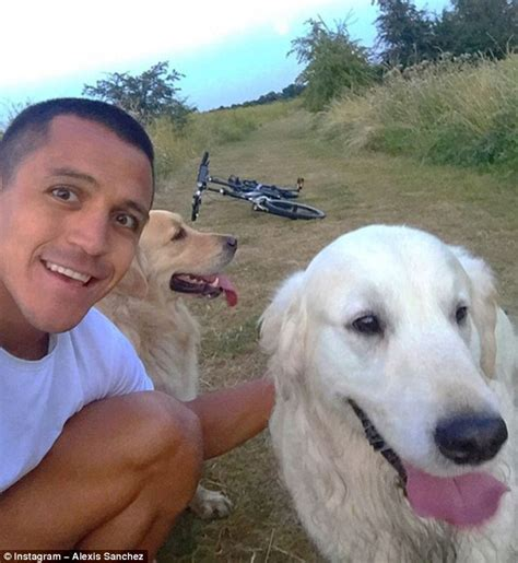 alexis sanchez dogs banner arsenal news atom and humber get 13 000 instagram