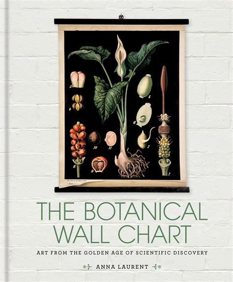 golden age of botanical the botanical wall chart art from the golden age of scientific discovery by anna laurent