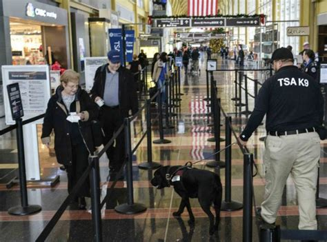 bomb sniffing dogs after brussels expect more bomb sniffing dogs at us airports and longer security lines