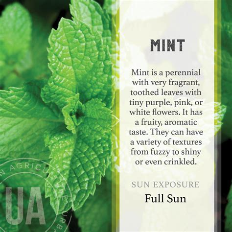 mint herb garden grow kit  jackson perkins