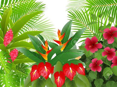 tropical rainforest clipart   cliparts