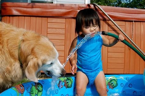 golden retriever with children the best breeds for healthy paws pet insurance