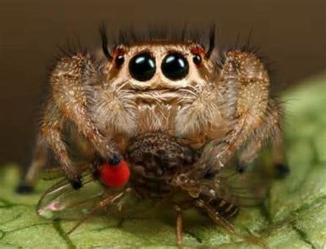 pet species pet spider species