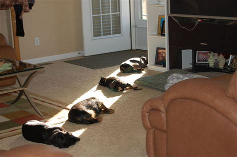 why do dogs lay on their back the offbeat reason why cats and dogs lay in the sun and their fur