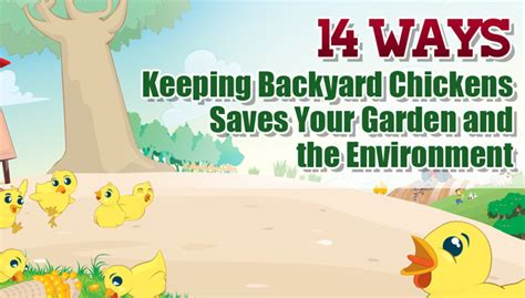 Backyard Chickens In The Environment 14 Ways Keeping Backyard Chickens Saves Your Garden And