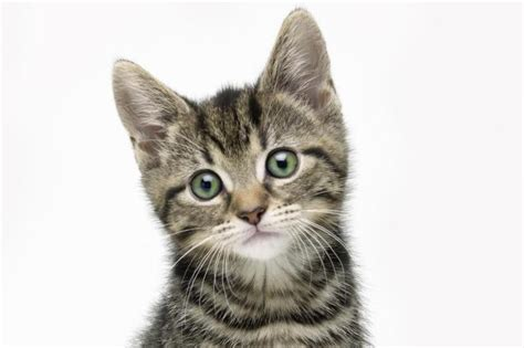 google images of cats google creates an artificial mind and all it thinks about