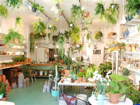 best plant store in amsterdam wildernis amsterdam amsterdam city guide