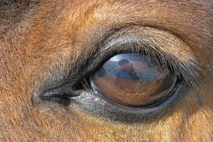 are horses color blind equine vision