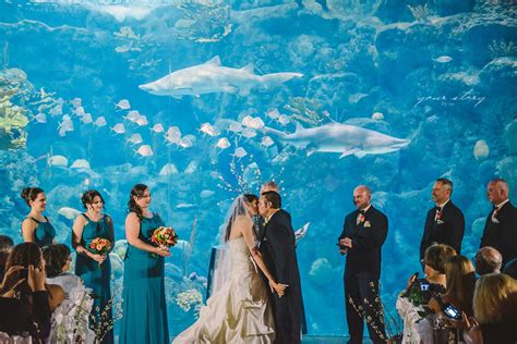 Melissa & Mike's Aquarium Wedding   Tampa Wedding