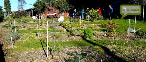 backyard permaculture australia permaculture for greenies