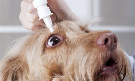 can you use eye drops on dogs aid kit 14 must items in a k9 emergency kit