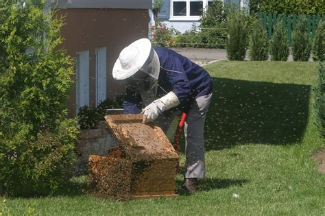 A Beehive In Your Backyard by How To Make Your Own Beehive A Step By Step Guide To Make