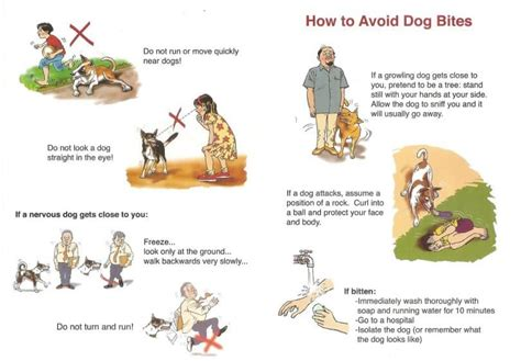 how to keep puppies from biting bite treatment antibiotics vaccines and plants