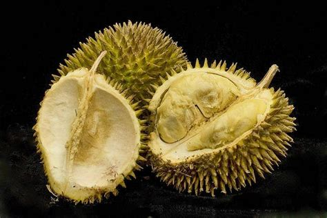 fruit with spikes 10 health benefits of durian fruit and nutrition facts