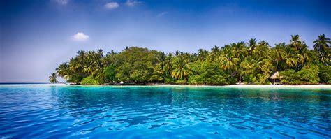 maldives beach palm trees tropical sea sand water
