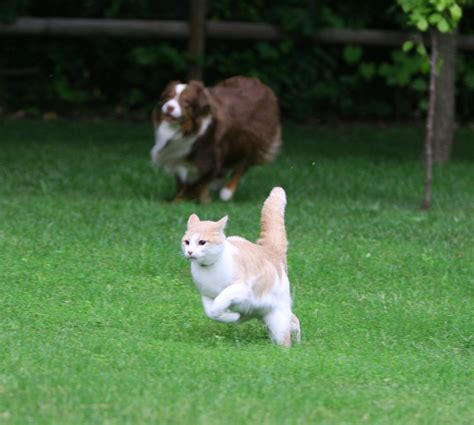 do cats and dogs get along helping cats and dogs get along healthy paws pet insurance
