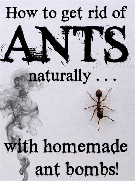 how to get rid of ants in my bedroom how to get rid of ants naturally with homemade ant bombs