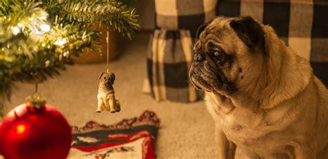 gifts  pug lovers rovercom